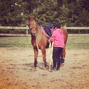 Chestnut Trakehner mare, Fate's Jewel